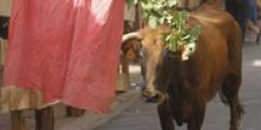 FOTOS: Encierros en Torquemada