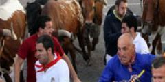 FOTOS: Cuarto encierro en las fiestas de Cuéllar