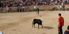 FOTOS: I encierro en Pedraza